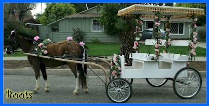 Horse and Buggy Rides in California